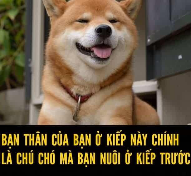 bạn thân là chó