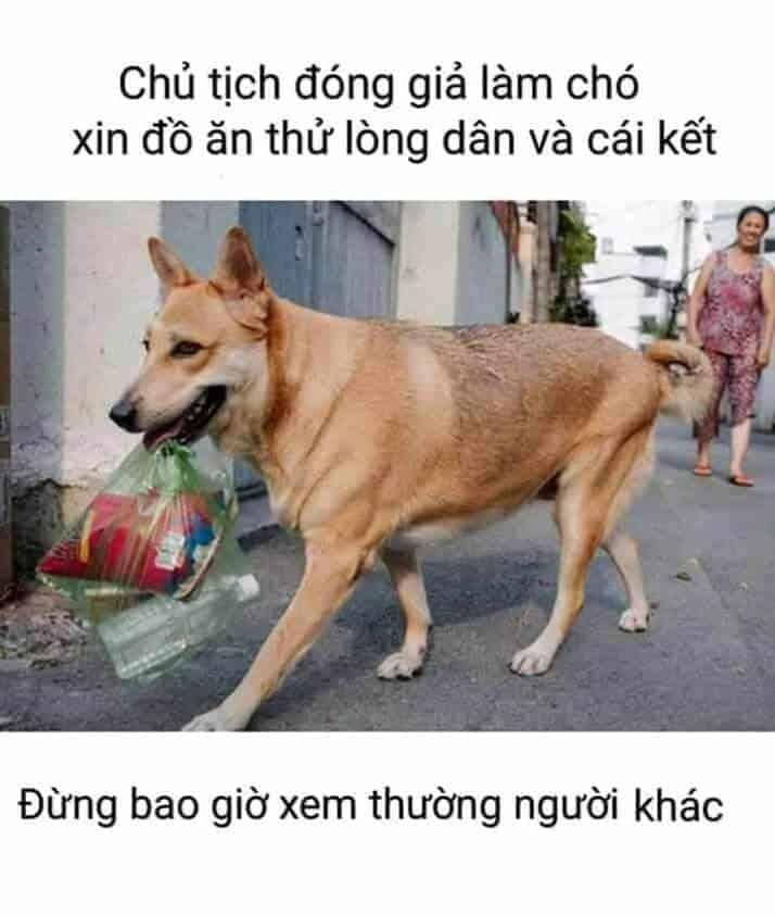 Chó cũng được làm chủ tịch