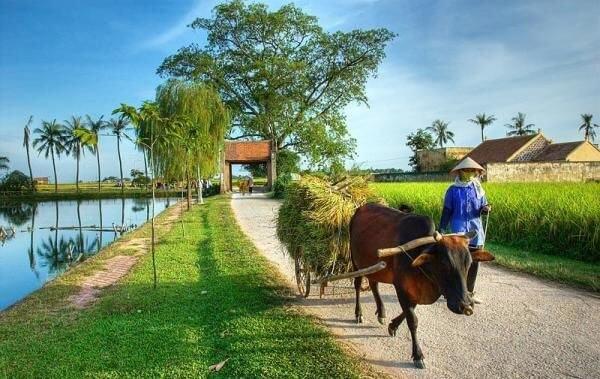 Bài viết về cuộc sống nông thôn tiếng Anh