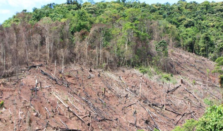 nạn phá rừng là nguyên nhân của biến đổi khí hậu